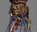 人体  男性人体  女性人体  人体解剖  完整解剖