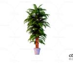 花卉 绿植 盆栽 环境 植物 绿叶 落地 C4D CR 园艺