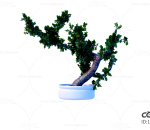 绿植 盆栽 环境 植物 绿叶 落地 C4D CR3