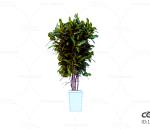 花卉 绿植 盆栽 环境 植物 绿叶 落地 C4D CR 园艺2