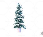 辫子树 发财树 辫子树干 盆栽 绿植 园艺 植物 绿叶 C4D cr