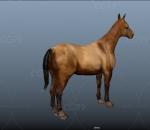 汗血宝马 烈马 千里马 赛马 现代动物 古代战马 马匹 骏马