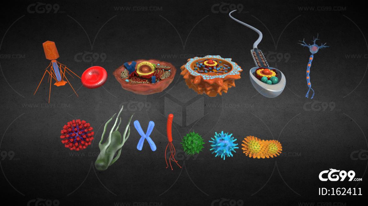 PBR-人类常见细胞 病毒 细菌合集