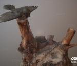 小鸟 小麻雀 飞行鸟类 动物 禽鸟 枯树桩 枯树根  枯萎树木 树桩 木墩子 枯树藤 伐木桩 老枯树