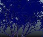 四季树 植物树木 果树 常青树 绿树 园林灌木树苗 远景春夏树木