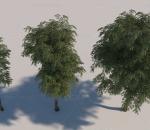 园林树木 树 树木 写实树木 场景树木 绿树 春夏树木 四季树 细叶树 老树 小树 白杨树 植物 果