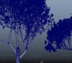 黄叶树 霍叶琳植物 黄叶树 小大树 柏花杨树 四季树 常青树