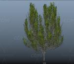 写实 古老 高大树木 植物 环境植被 春夏花草 场景树木 绿树 四季树 杉树