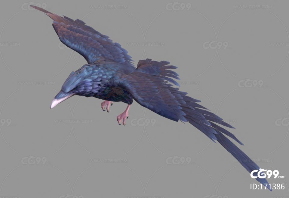 乌鸦 鸟类 渡鸦 黑乌鸦 鸟 飞禽