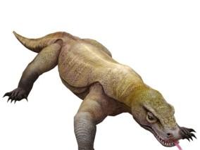 写实动物 高清模型 巨蜥