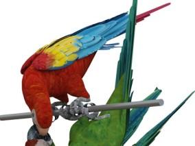 写实动物 高清模型 鹦鹉