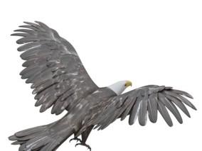 写实动物 高清模型 鹰