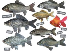 鱼类标本组合cg模型