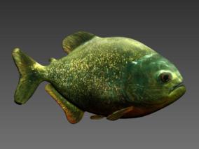 食人鱼3d模型