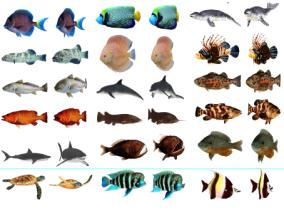 鱼cg模型