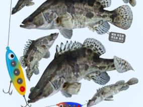 家鱼食用鱼3D模型