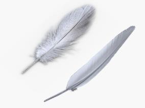 羽毛cg模型
