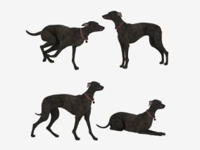 狗cg模型