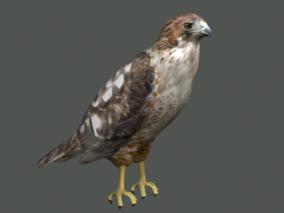 鹰隼3D模型