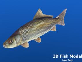 鱼3d模型