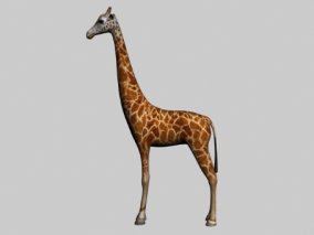 长颈鹿3d模型