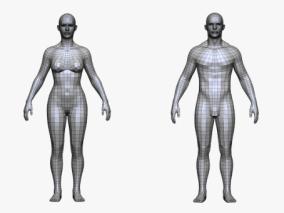 基础人体3D模型