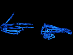 人体器官cg模型