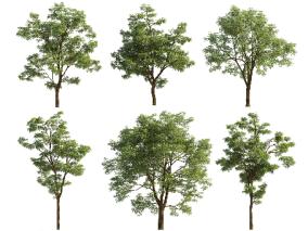 树木cg模型