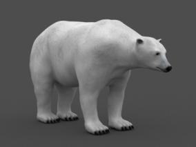 动物cg模型