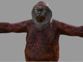 红毛猩猩 大猩猩 拟人猿 红猩猩 猩球崛起