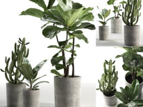 植物3d模型