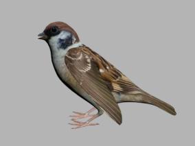 小鸟3D模型