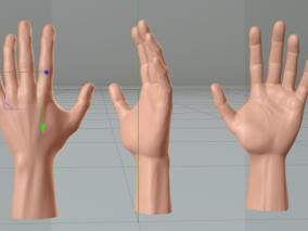 手掌模型(默认渲染器)