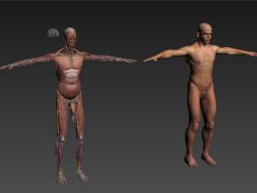 人体cg模型