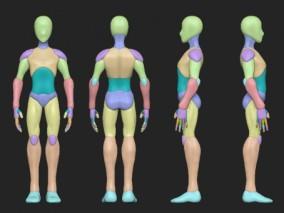 人体 肌肉 解剖