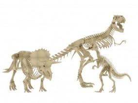 恐龙 三角龙 霸王龙化石 动物骨骼 侏罗纪