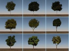 12组树木组合3D模型