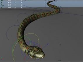 毒蛇 花蛇 蛇动画 草丛中的蛇 cg模型