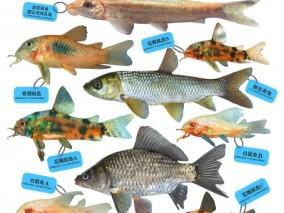 超写实鱼类合集3D模型