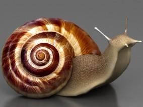 写实蜗牛 蛞蝓 软体动物 腹足纲陆生动物 3d模型