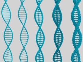 DNA排序 DNA结构模型 链条 生物模型 遗传物质结构 螺旋式结构 遗传基因