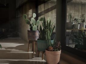 花卉 3d模型