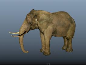 大象 3d模型