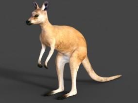袋鼠 3d模型
