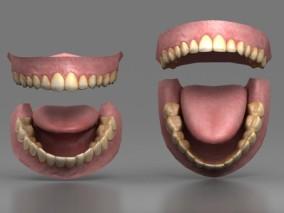 牙齿 人体模型 医用牙齿口腔 舌头 大黄牙 3d模型