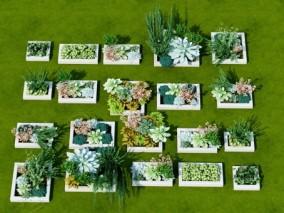 现代盆栽 多肉植物 3d模型