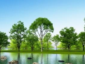 现代植物树木3D模型