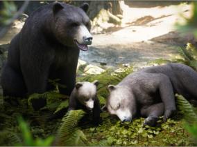 熊  3d模型