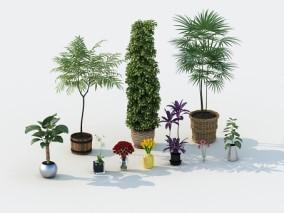 绿植 3d模型