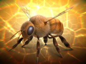 蜜蜂 3d模型